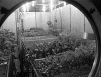 Тернистый путь замкнутых биологических систем жизнеобеспечения